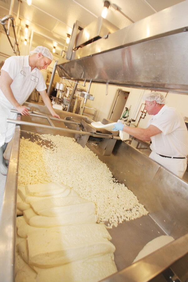 WELL, HAVEN'T YOU HEARD ABOUT THE CURD? Castle Rock Organic Farms's cheesemakers use 150 milking cows to produce 20,000 to 25,000 pounds of dairy products each week.
