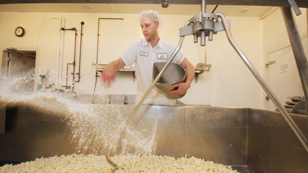 A worker at Castle Rock Organic Farms making cheese curds for all of your enjoyment.