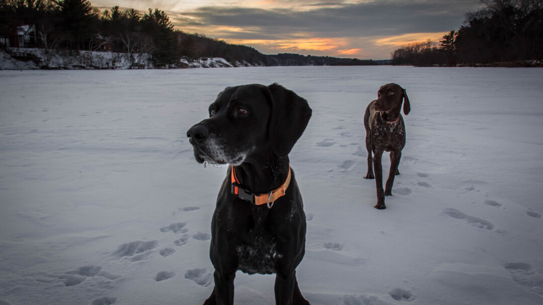 Justin Patchin's pups, out on the Eau Claire River.