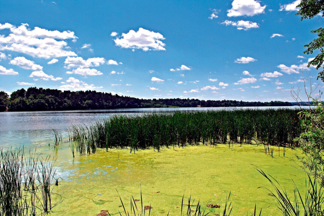 Slimy algae blooms are a common sight on the lake.