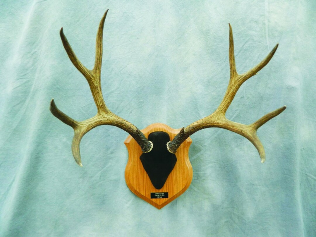 Everything from antlers to anglers.