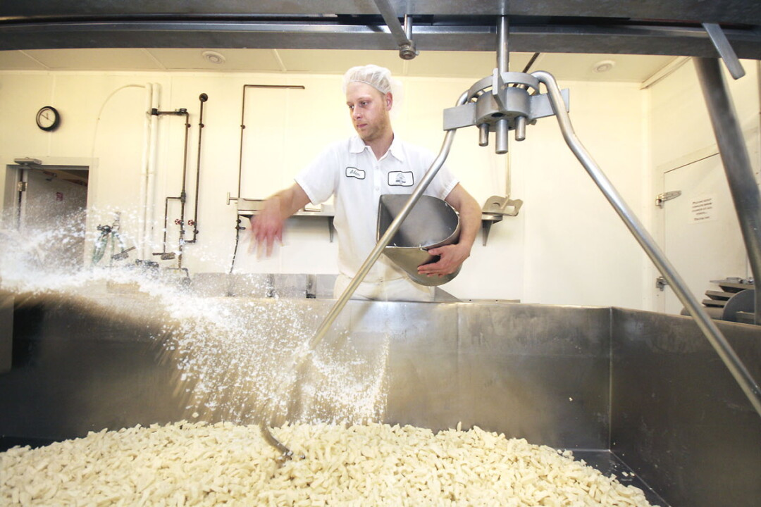 Salting curds at Castle Rock Organic Dairy in Osseo