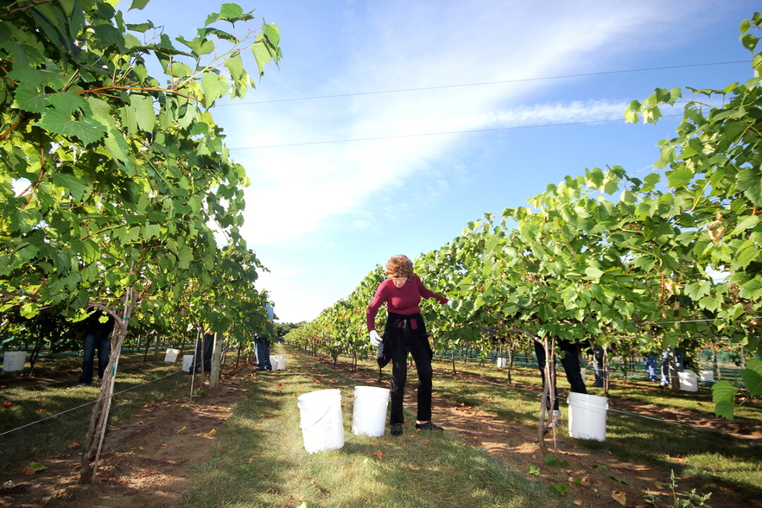 The Harvest at River Bend Vineyard & Winery