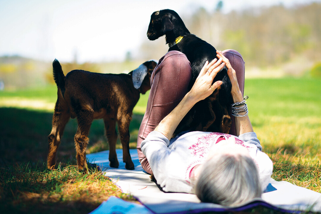 NO JOKE – GOAT YOGA MIGHT FLOAT YOUR BOAT. Bifrost Farms owner Meg Wittenmyer will be hosting goat yoga sessions beginning in May.