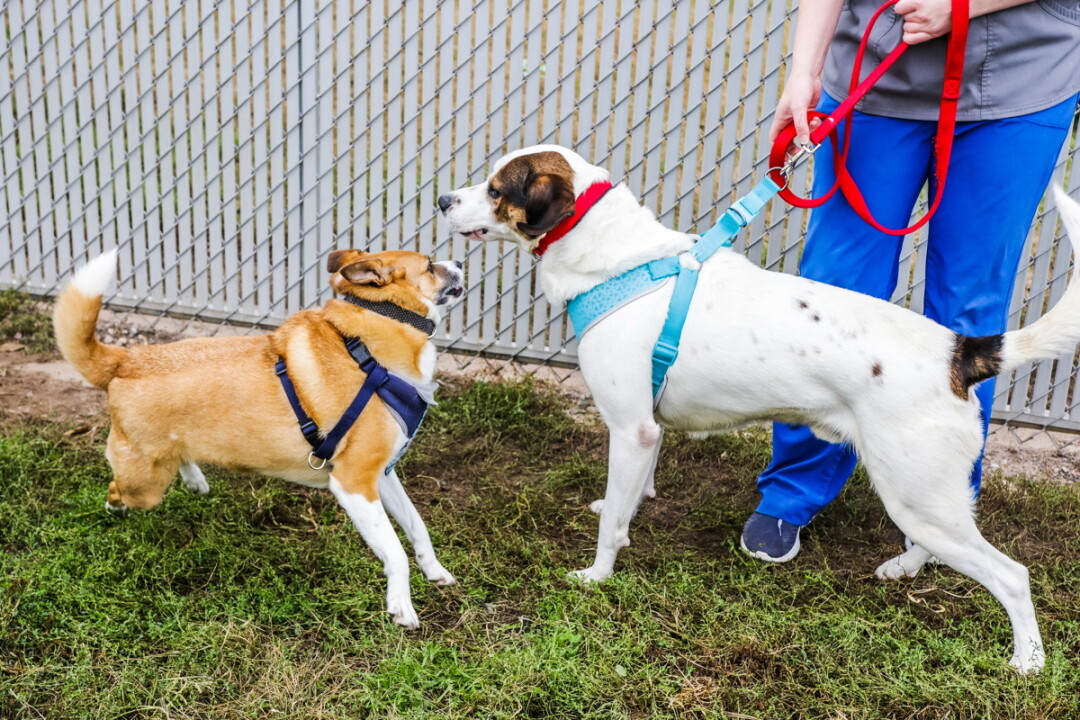 Puppers Zane, left, and Jack meet  at the Eau Claire County Humane Association