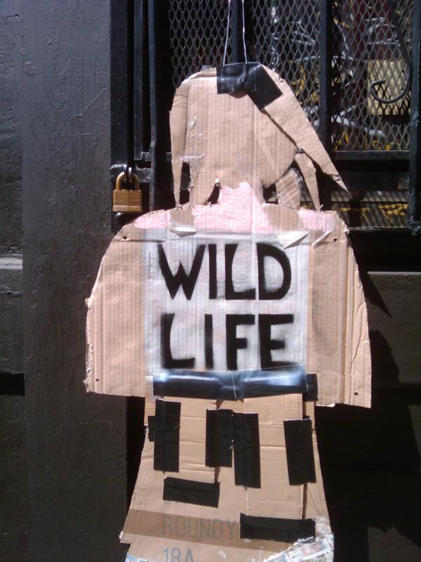 Photo: Wild Life