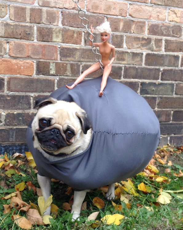 What do polyester fiber, a naked Barbie doll and an adorable pug have in common? This stellar costume!