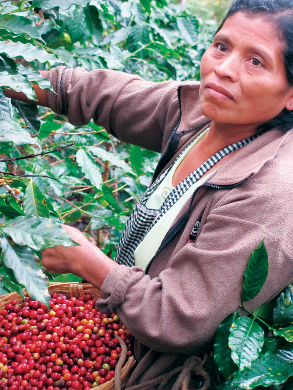 Fabiana, a coffee farmer in the Huehuetenango region of Guatemala, is one of many who work with Farmer to Farmer.