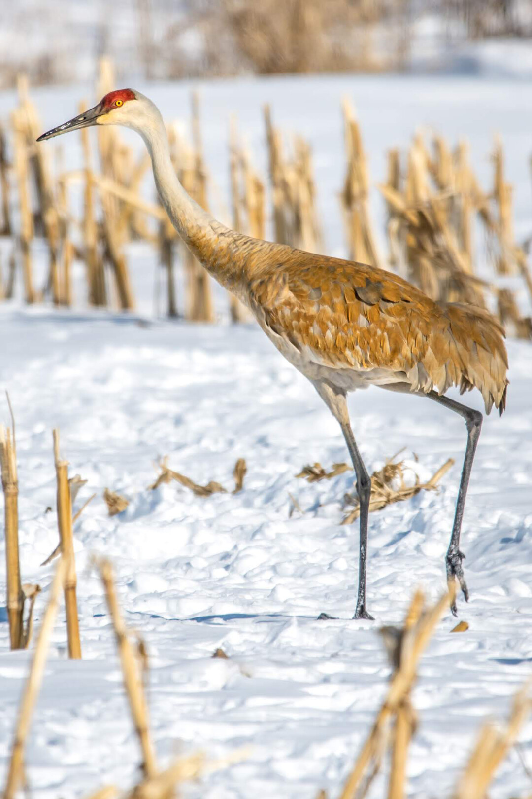 Spring Is In Air Cranes Are Returning >> 10 Signs Of Spring In Wiscosnin These Are The First Plants